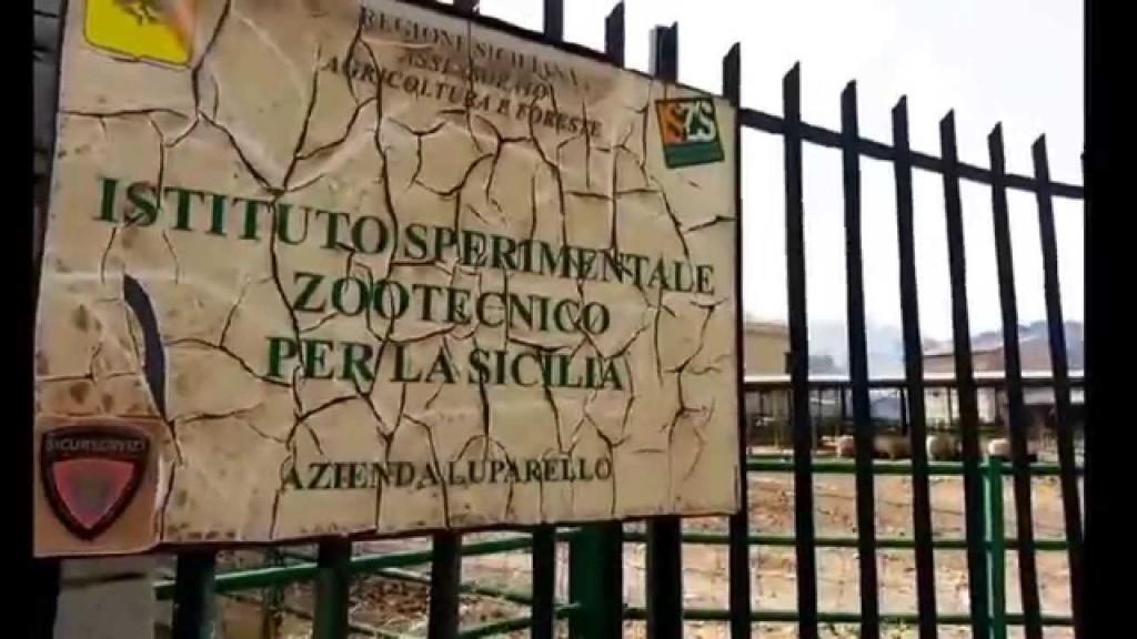 Stato di agitazione dei lavoratori dell'Istituto Sperimentale Zootecnico