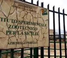 """ISTITUTO ZOOTECNICO, DIPENDENTI SENZA STIPENDIO DA TRE MESI. LA FLAI  ALL'ASSESSORE ALL'AGRICOLTURA: """"RIMUOVERE LE CAUSE E I DIRIGENTI CHE STANNO PROVOCANDO L'AGONIA DELL'ENTE"""""""